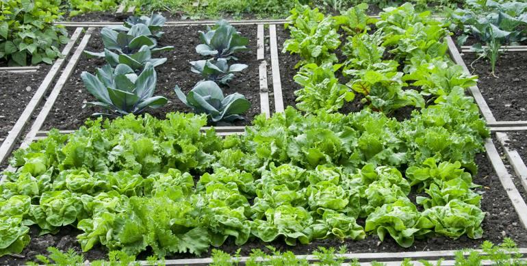 Выращивание в теплицах зелени 63