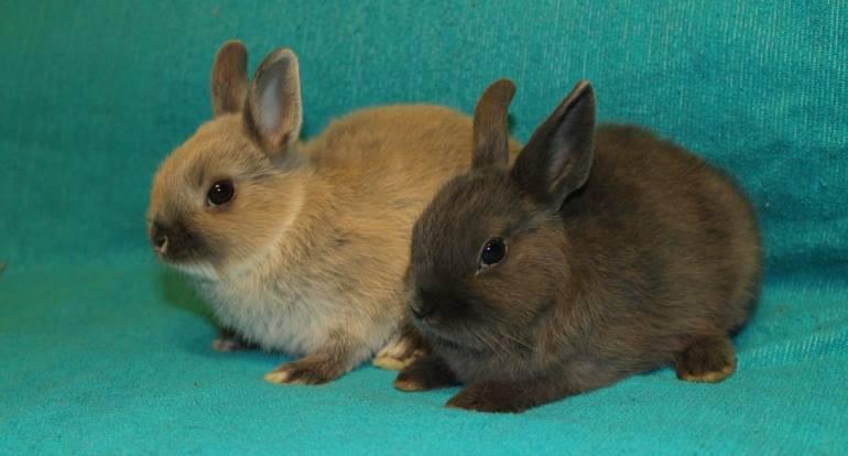 Разведение декоративных кроликов - бизнес план
