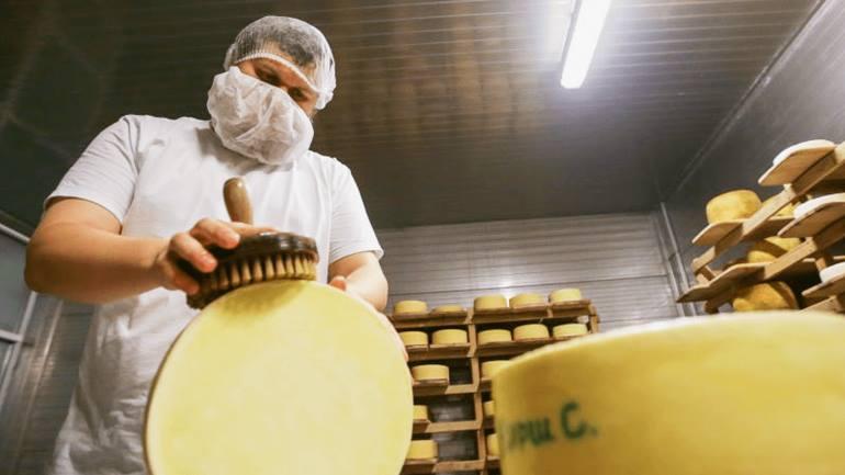 Как открыть сыроварню с нуля?