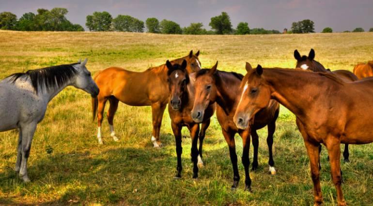 Разведение лошадей - полезные советы начинающим
