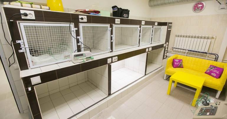 Открытие ветеринарной клиники