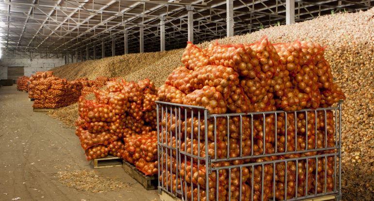 Бизнес на хранении овощей