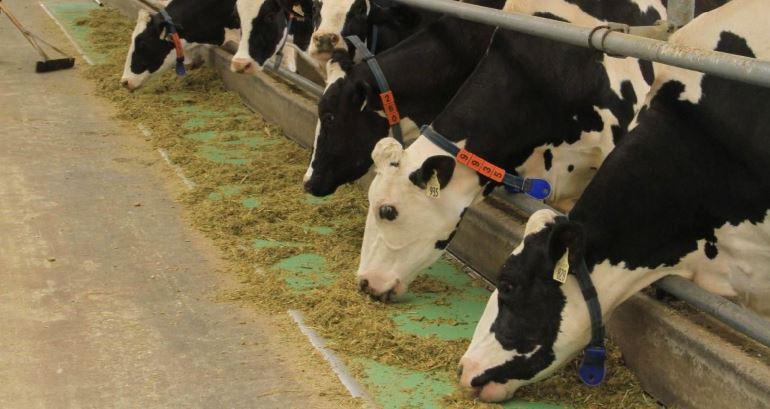 Выгодный бизнес – животноводство